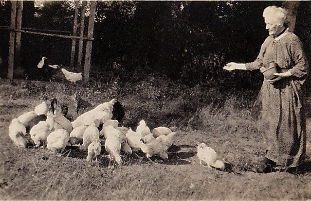 Mother feeding the Chickens Gt Saxham Suffolk 1923