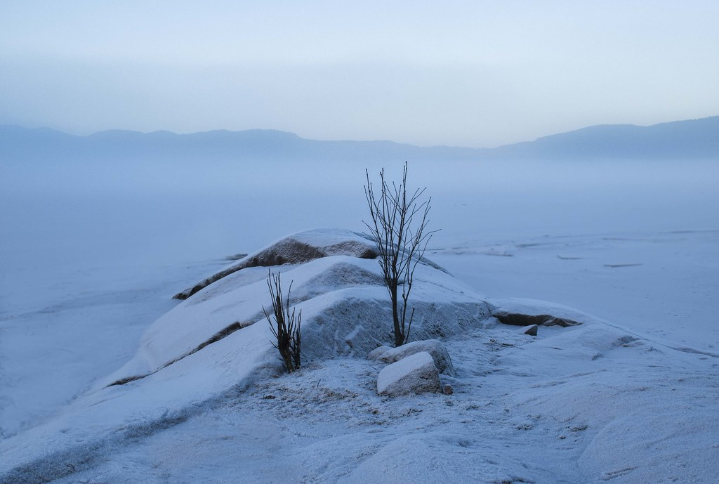 Misty_trees