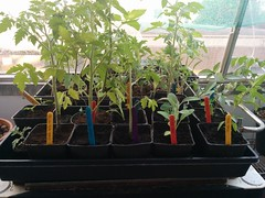 Seedlings ready for sale!