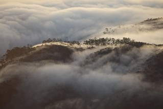 Mad Fog Sneeking Around Adams Peak