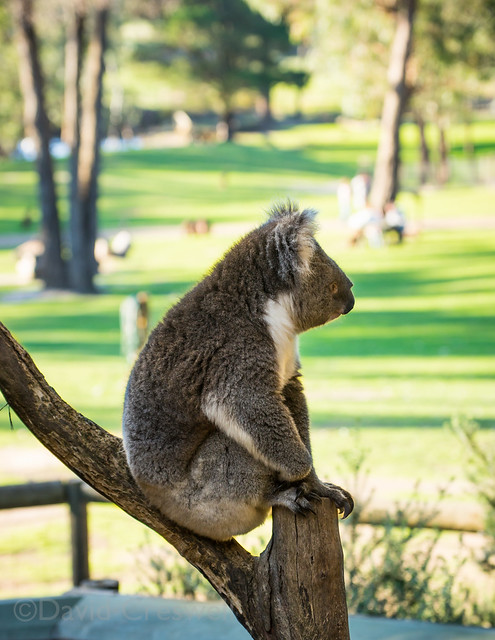 Ballarat Wildlife Park Cafe