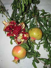 flower(0.0), plant(0.0), produce(0.0), apple(0.0), pomegranate(1.0), branch(1.0), fruit(1.0), food(1.0),