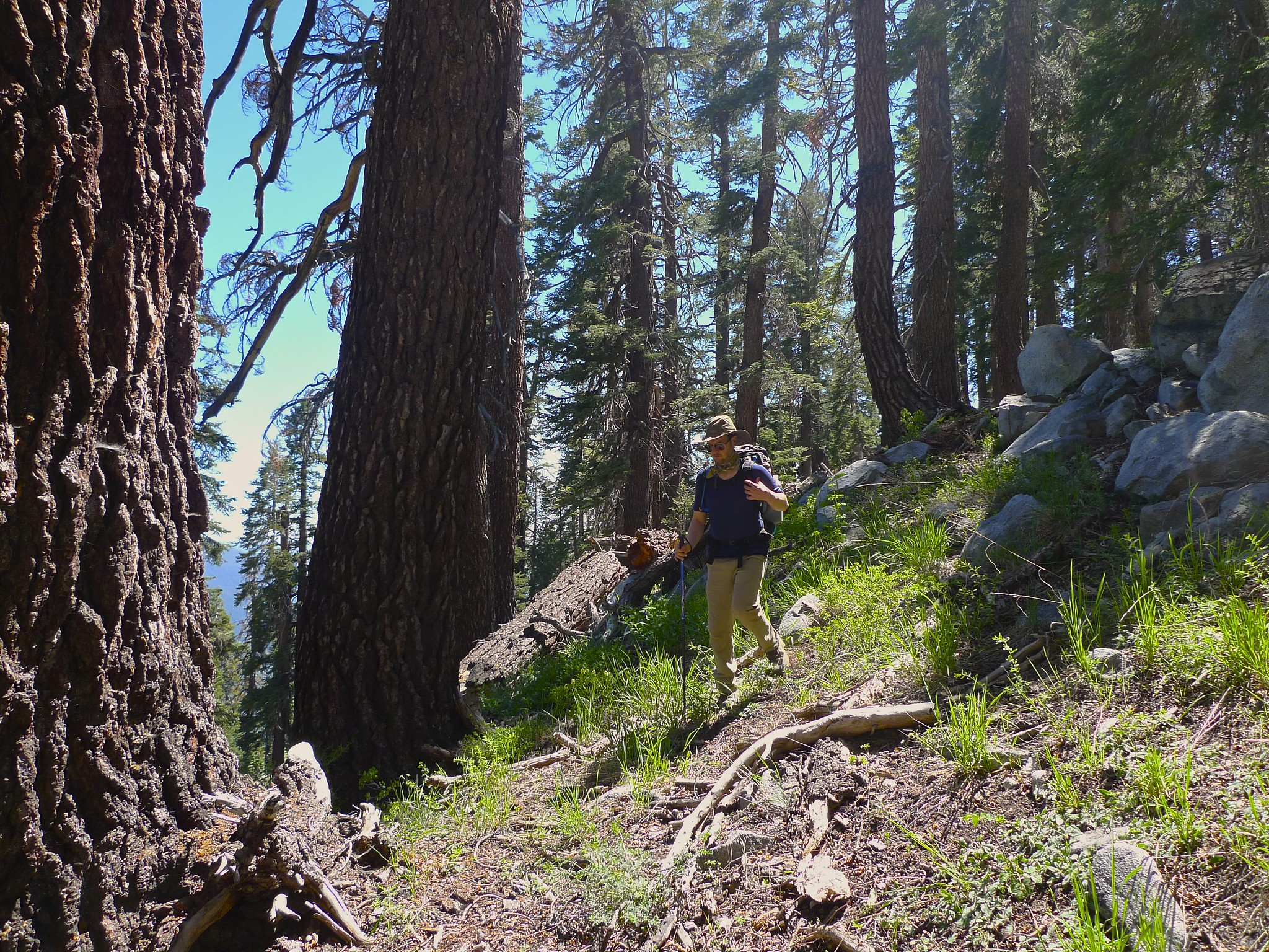 Picking our way through steep open forest on our off trail route to Moose Lake from Alta Meadow