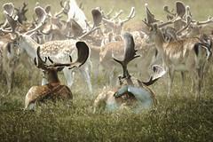hunting(0.0), springbok(0.0), pronghorn(0.0), gazelle(0.0), animal(1.0), deer(1.0), herd(1.0), fauna(1.0), white-tailed deer(1.0), wildlife(1.0), reindeer(1.0),