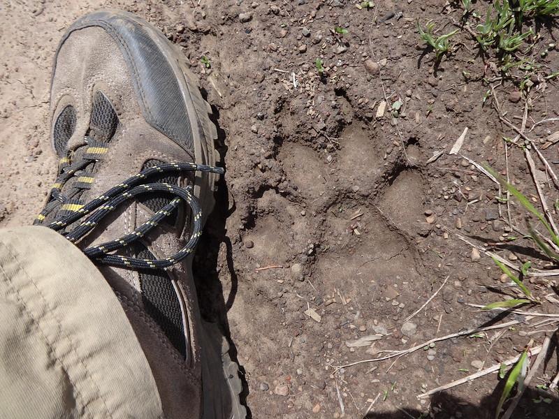 Hells Canyon Loop: 6/19/14-6/22/14 - Oregon Hikers