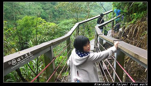 天梯 (12)