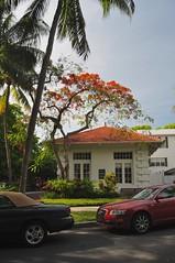 The Street Scene in Key West, FL
