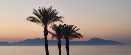 blue sunset sonnenuntergang kos greece mystik bluehour blau griechenland ferien mystic palmen blauestunde