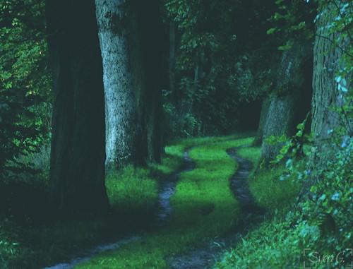 thy way in the dark forrest