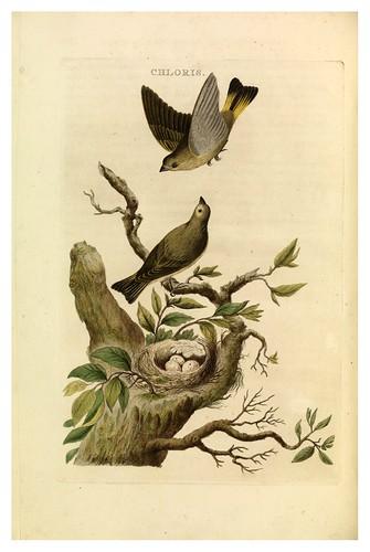 019-Verderon- Nederlandsche vogelen- Nationale bibliotheek van Nederland