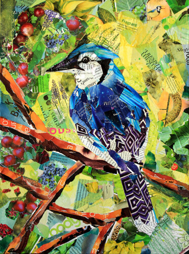 Blue-Jay-Collage