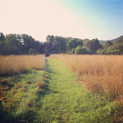 Morning walk at Mount Pollux a Conservation Area, Amherst, MA #amherst #summer #morning #westernma
