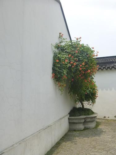 Jiangsu-Suzhou-Jardin Administrateur (37)