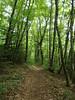 Trail back to Verthier @ Hike to Pointe de la Rochette