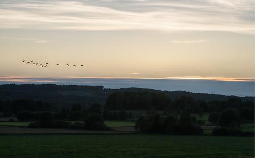 sunset landscape evening geese mark tm 105mm västragötaland västergötland sjuhärad fotskäl sörvilg