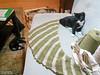 test crochet with foster kittens