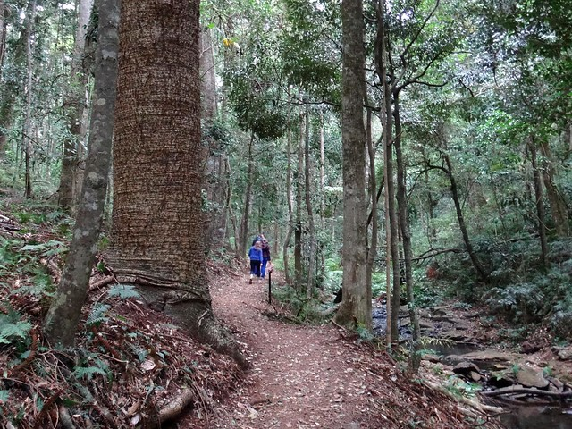 Scenic Walk, Bunya Mountains