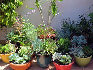 Save water and plants » SIP and save rather than soak - Photo of 09/07/14 about 1 month after start of installation on 08/04/14