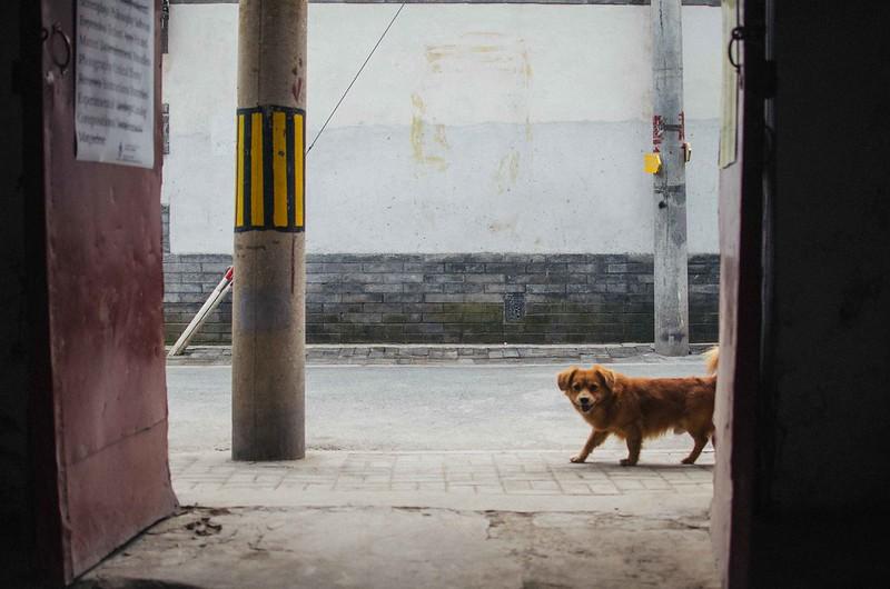 70/365: Curious Dog