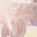 Light Leaks dog