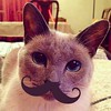 "Mom sent me a photo of her cat. The caption read, ""Meowstache."" Yup."