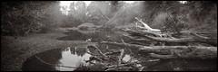 riverbed.vermeer02.jpg