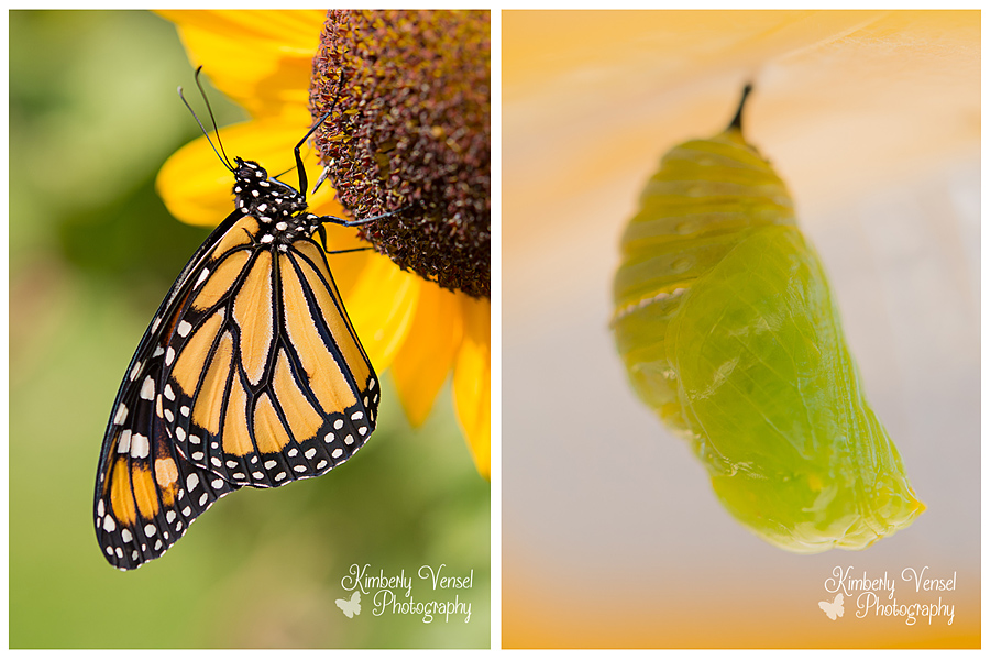 monarch-in-and-out
