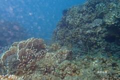 珊瑚纏繞漁網