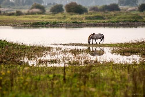 horse lake landscape