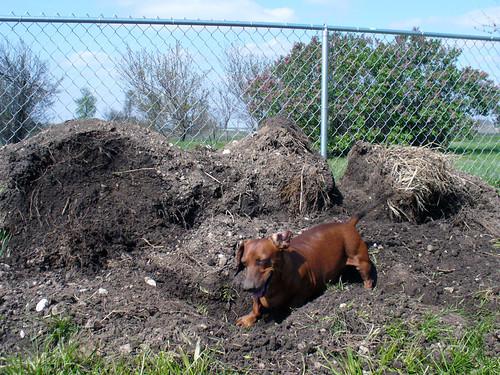 2007-04-12 - Doggie Dirt Pile - 0007 [1024x768]