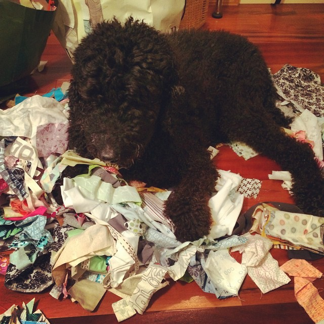 Lightning, the scrappy quilting dog. #scraptastictuesday