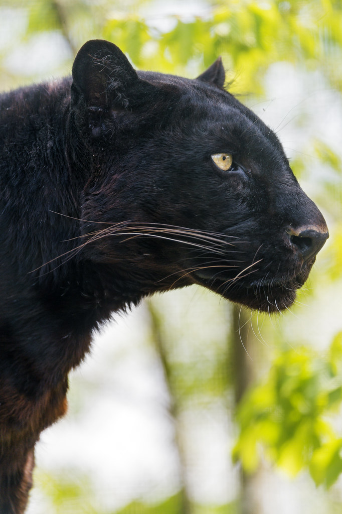 Profile of Blacky