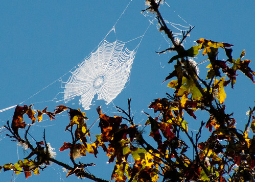 09-27-14 Tree Top Web
