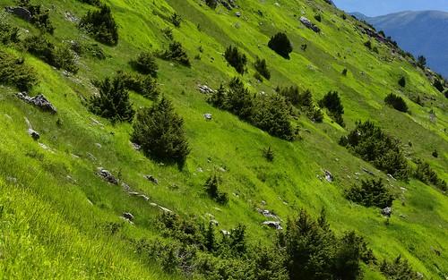desktop epirus featured grass greece landscape mttymphi spring vikospark vikosaoösnationalpark