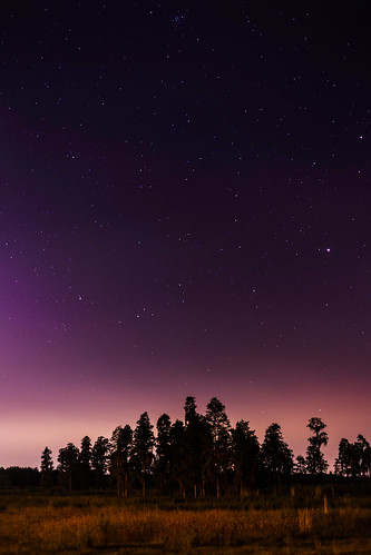 stars nightscape nocturnal florida astronomy nightsky treelines dadecity landscapeshotinportrait