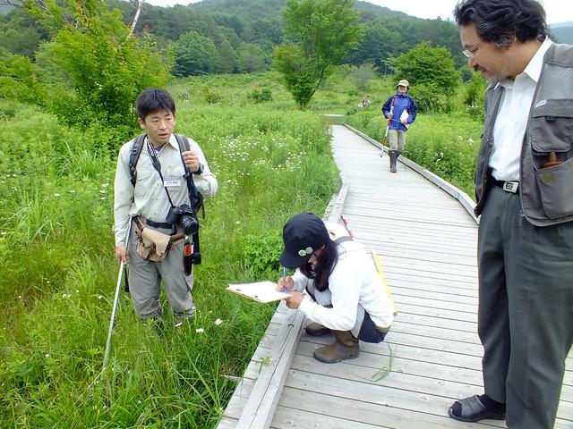 湿原を訪れていた人も興味深そうに見守る.