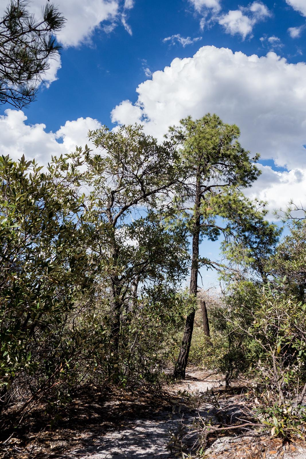 1407 Brush Corral Trail near the Brush Corral Shortcut Trail