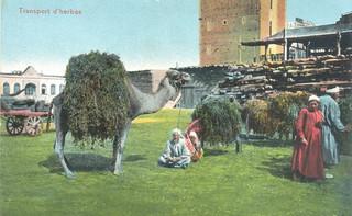 041-Transport d'herbes