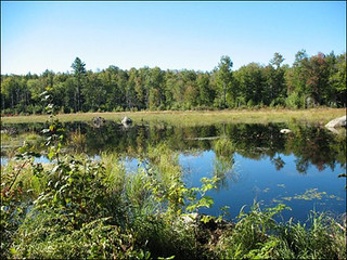 Beaver Pond at Camp Chenoa (photo: Stephen Froling)