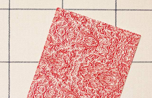 pattern box - brittany keats cerullo red coral