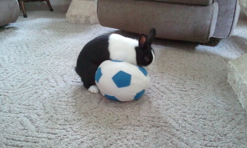 Holly plays soccer