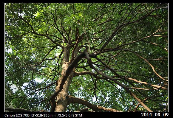 20140809_Tree