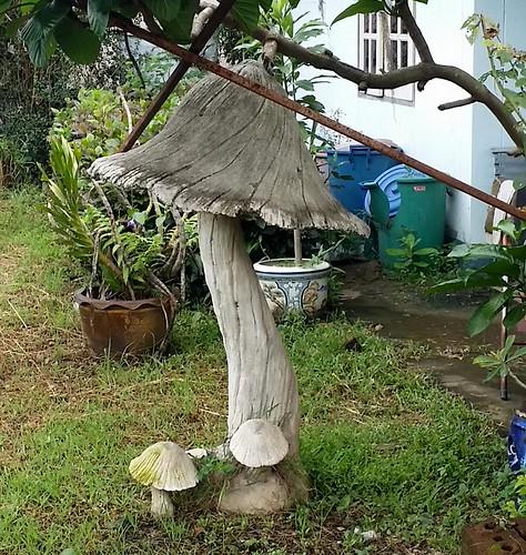 חוות הפטריות בנונג קאי