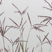 Big Bluestem (Andropogon gerardii) by ER Post