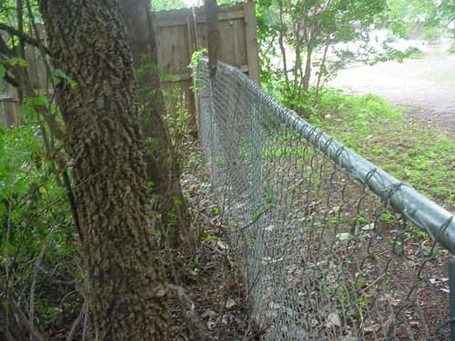 bare fence 1