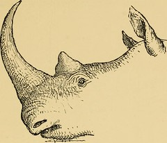 "Image from page 262 of ""Horn measurements and weights of the great game of the world: being a record for the use of sportsmen and naturalists"" (1892)"