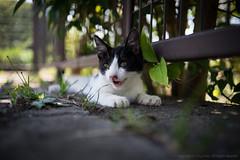 stray kitten 2