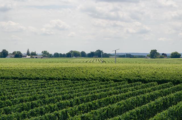 20140726-Niagara-on-the-Lake-Wine-Country-2444