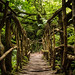 Puzzlewood, Forest of Dean by chrisgj6
