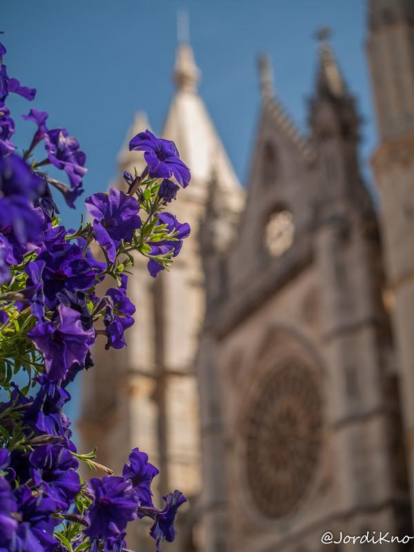 Vistas a la catedral